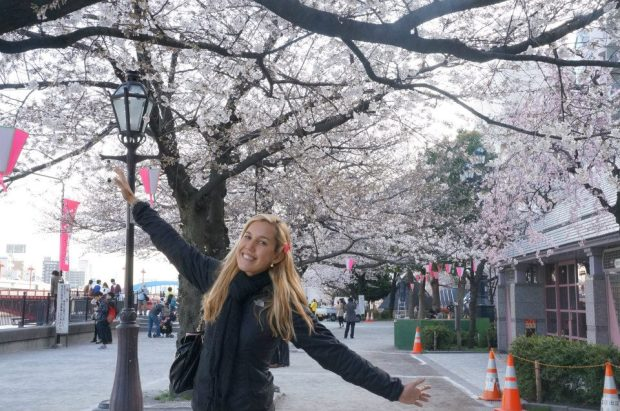 Japão e a flor de cerejeira